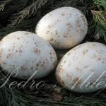 Huevos de sustitución