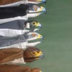 marionetas para cebar en la cría