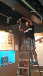 montaje de representación de gavilán en vuelo